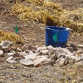 round-activeharvesting2