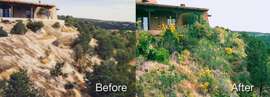 Before and After PermaDesign work.